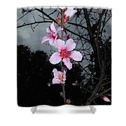 Peach Blooms Shower Curtain