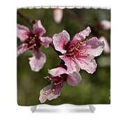 Peach Blossom Clusters Shower Curtain