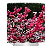 Peach Blossom Shower Curtain by Kaye Menner