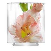 Peach Flushed Gladiolus Shower Curtain