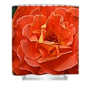 Peach Petals Shower Curtain