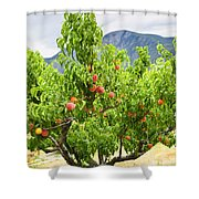 Peaches On Tree Shower Curtain