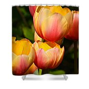 Peachy Tulips Shower Curtain