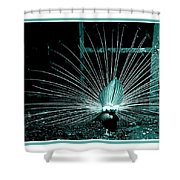 Peacock Blues Tail Shower Curtain