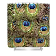 Peacock Feather Eyes Shower Curtain