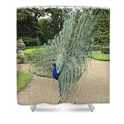 Peacock Glory Shower Curtain