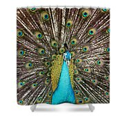 Peacock Plumage Feathers Shower Curtain