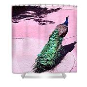 Peacock Walk Shower Curtain
