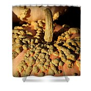 Peanut Pumpkins Shower Curtain by Karen Wiles