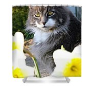 Peanut The Cat And Jonquils Shower Curtain