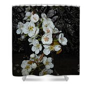 Pear Blooms And Tree Shower Curtain