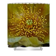 Pear Cactus Close Up Shower Curtain