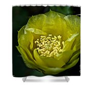 Pear Cactus Flower Shower Curtain