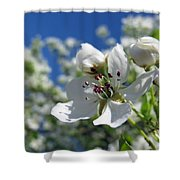 Pear In Bloom Shower Curtain