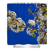 Pear Spring Shower Curtain