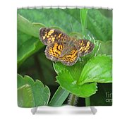 Pearl Crescent Butterfly Shower Curtain