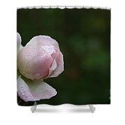 Pearlized Shower Curtain