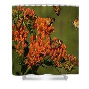 Pearly Crescentpot Butterflies Landing On Butterfly Milkweed Shower Curtain