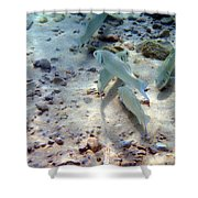 Pebbles And Fins Shower Curtain