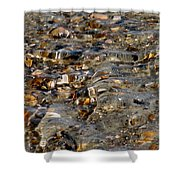 Pebbles And Shells By The Sea Shore Shower Curtain