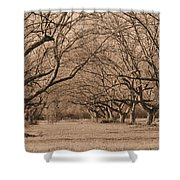 Pecan Orchard Shower Curtain