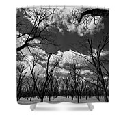 Pecan Trees Shower Curtain