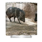 Peccary Shower Curtain