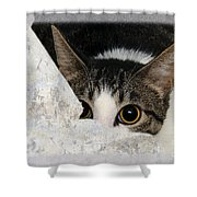 Peek A Boo I See You Too Shower Curtain by Andee Design