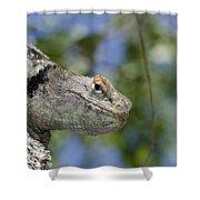 Peek-a-boo Lizard Shower Curtain