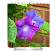 Peek-a-boo Morning Glories Shower Curtain