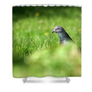 Peek-a-boo Pigeon Shower Curtain