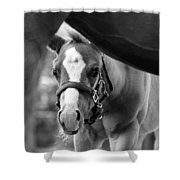 Peek'a Boo - Black And White Shower Curtain