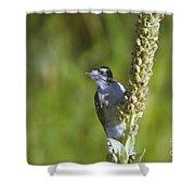 Peekaboo Birdie  Shower Curtain