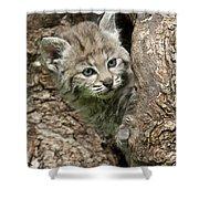 Peeking Out - Bobcat Kitten Shower Curtain