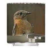 Peeping Bluebird Shower Curtain
