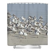 Peeps At The Beach #1 Shower Curtain