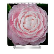 Pefectly Pink Shower Curtain