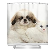 Pekinese Puppy And Maine Coon-cross Shower Curtain