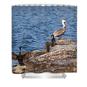 Pelican And Cormorants Shower Curtain