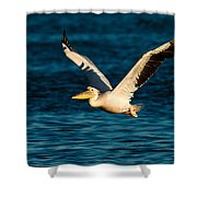 Pelican Brief Shower Curtain