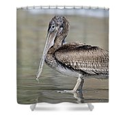 Pelican Contemplation Shower Curtain
