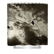 Pelican Fly By Shower Curtain