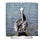 Pelican Grooming Shower Curtain