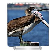 Pelican I Shower Curtain