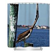 Pelican IIi Shower Curtain
