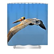 Pelican In Flight Shower Curtain