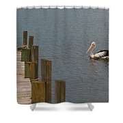 Pelican In The Water Next To A Timber Landing Pier Shower Curtain