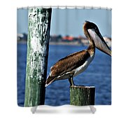 Pelican Iv Shower Curtain