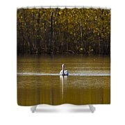 Pelican On Golden Pond Shower Curtain