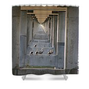 Pelican Perch With Seven Mile Perspectives Shower Curtain